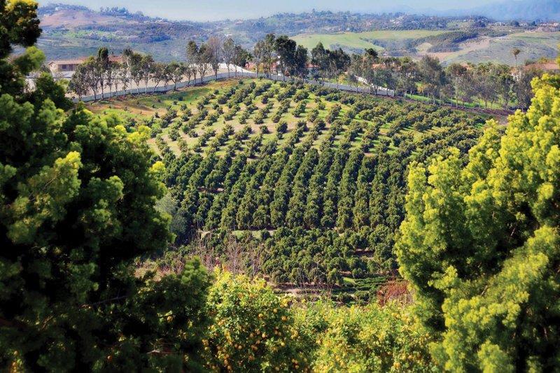 slr-farm (7)